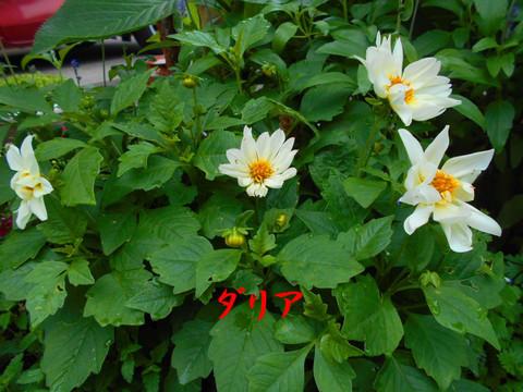 Dscn1254jpg50_1