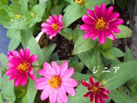 Dscn1336jpg50_1