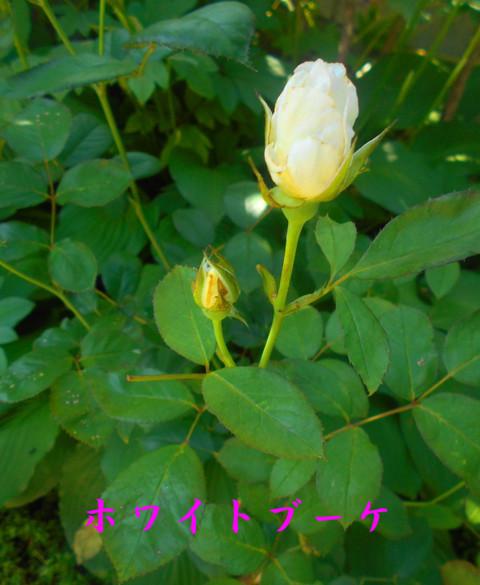 Dscn2382jpg170_1
