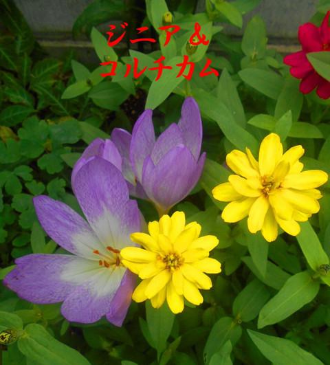 Dscn2567jpg170_1_2