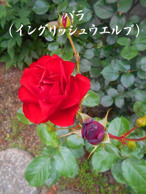 Dscn3212jpg50_1