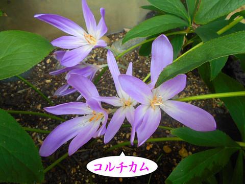 Dscn3491jpg60_1