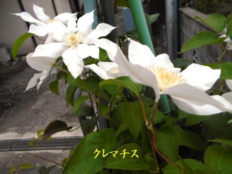 Dscn4145_1