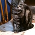我が家の猫ちゃんです