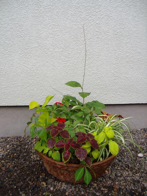 夏から秋にかけての寄せ植え