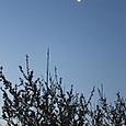 朝焼けと梅と月