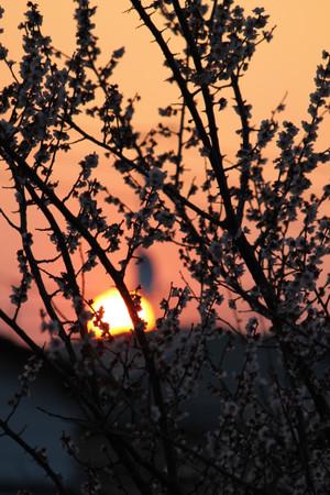 朝日の昇る景色