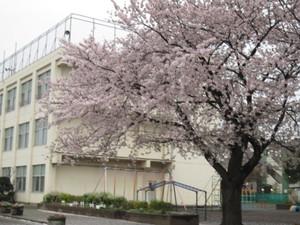 春雨の朝-1