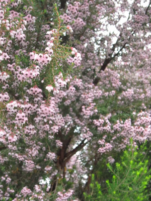 春雨の朝ー2