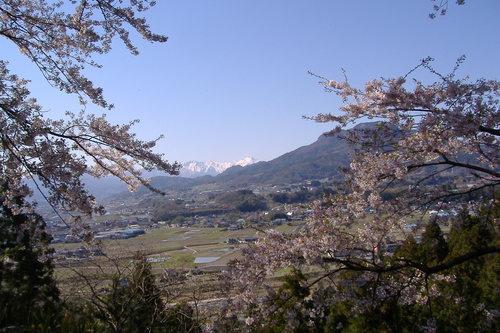 残雪の谷川岳(下公園の桜)