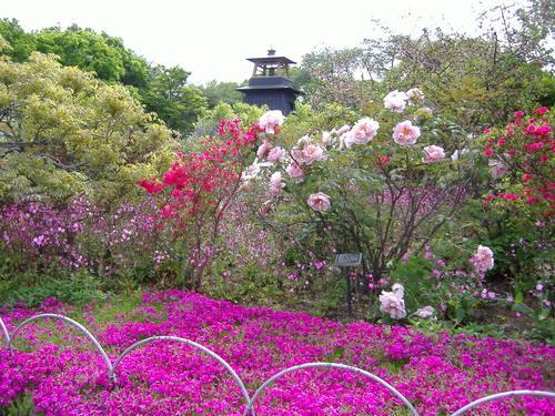 花いっぱい(ツツジ・ボタン・いろいろ)