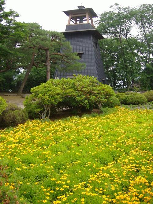 黄色い花(名称?)